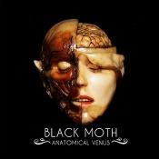 LP Black Moth-Anatomical Venus